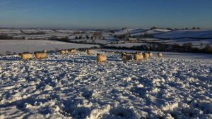 Charity Christmas cards on sale now!
